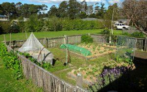 veggie garden actual